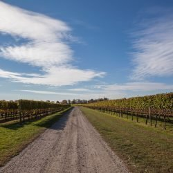 Newport Vineyards in Fall, photo by Marianne Lee Photography