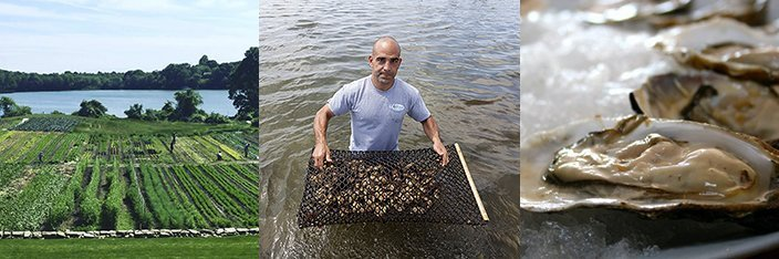 Matunuck Oyster & Vegetable Farm
